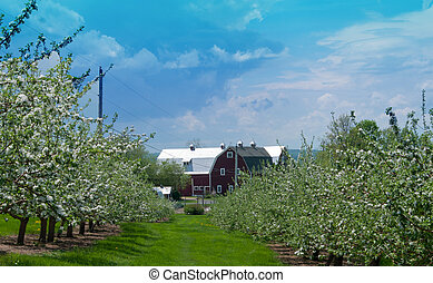 Red Barn at the end of apple tree