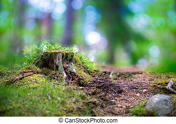 Tree stump in scandinavian forest - beautiful scandinavian...