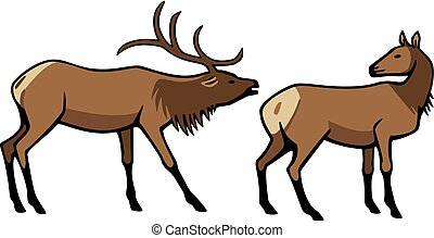 Male and Female Elk - vector illustration two elk, a male...