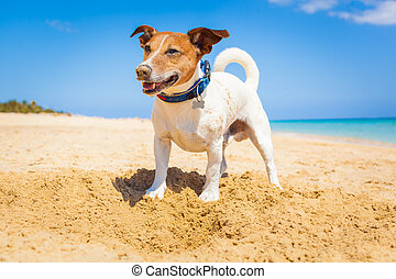 dog digging a hole in the sand at the beach on summer...
