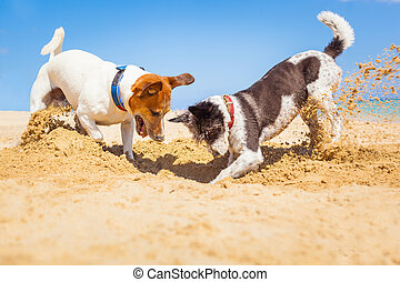 dogs digging a hole - jack russell couple of dogs digging a...