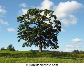 Lone tree - View of lone tree in field on sunny day