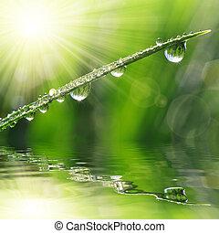 fresco, verde, capim, com, orvalho, drop, ,