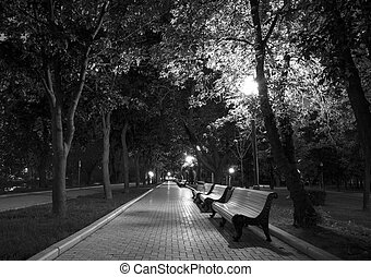 Night Park black white - Night Park Wood Benches and Alley...