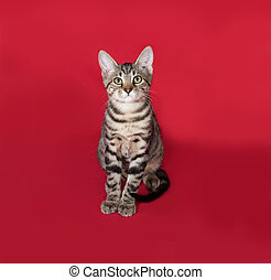 Small striped kitten sitting on red background