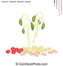 Beans Sprouts with Vitamin K, Vitamin B and Vitamin C -...