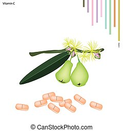 Green Rose Apple with Vitamin C on White Background -...
