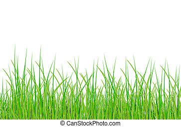 raster grass