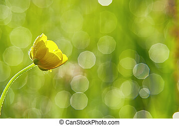 Buttercup - One flower buttercup meadow with blurred...
