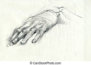 a hand drawing - hand, palm - a hand drawn illustration from...