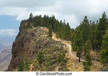 Inland Central Gran Canaria, Artenara area, Canarian Pine...