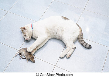Cat catch and bite mouse, rat - White cat catching and...
