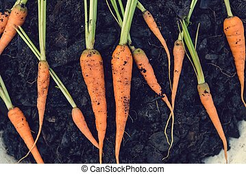 Baby carrots, fresh vegetables grown with pesticides and...