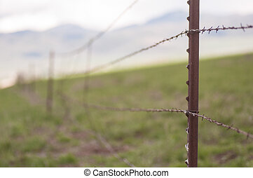 Barbed Wire - Barbed wire fence with soft-focus background.