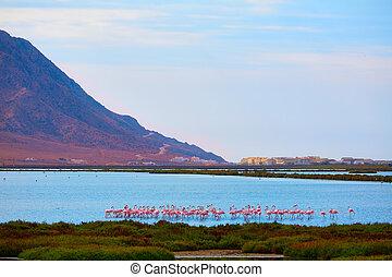 Las Salinas Cabo de Gata Almeria flamingos Spain - Las...