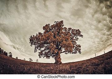 roble, árbol