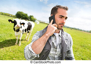 Young attractive farmer in a pasture with cows using mobile...