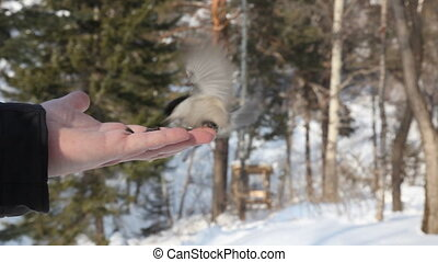 Birds eating seeds from hand