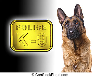 german shepard k9 police - german shepard isolated on white...
