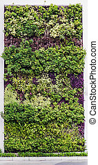 eco friendly green wall