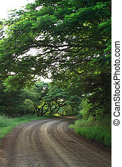 dirt road - a dirt road in a foresty area
