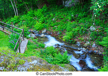 Torrent - View of torrent in Arzo countryside, Verbania...