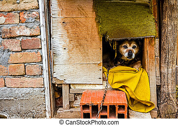 Dog house - Dog is peaking from his wooden dwelling house