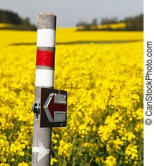 golden flowering rapeseed field with tourist sign - View of...