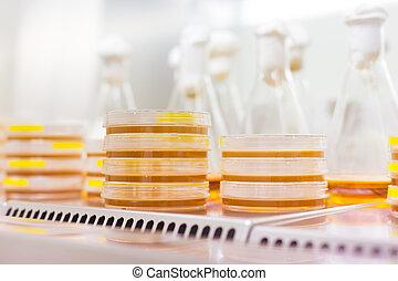 Petri dish in laminar flow