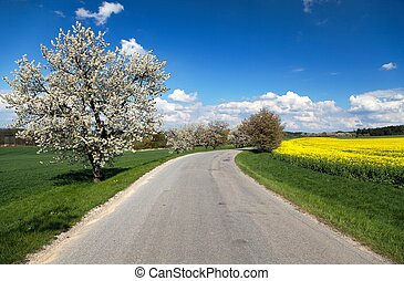oad and alley of flowering cherry-trees with beautiful sky