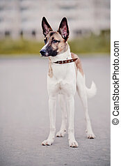 Not purebred dog - Not purebred domestic dog in a collar on...