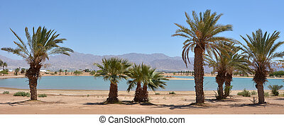 Lagoon with palm trees in Eilat, Israel - Cityscape of a...