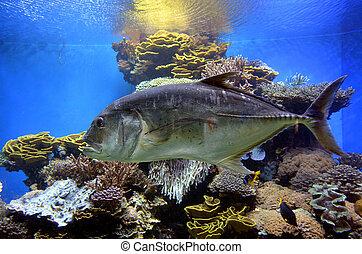 Tuna fish swim in Coral World Underwater Observatory...