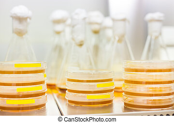 Petri dish and Erlenmeyer flask. - Cell culture samples on...
