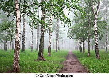 Morning mist birch forest