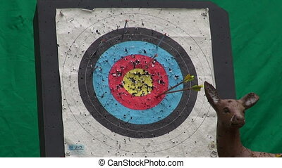 hunters Arrow in archery target