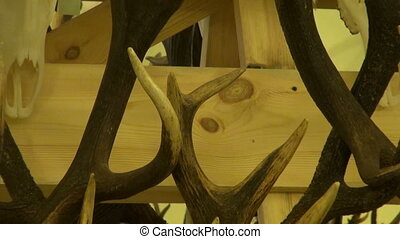 hunters trophy collection - deer antlers horn and skull...