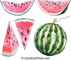 Watercolor watermelon - Beautiful vector image with nice...