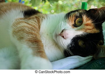 Cute kitty - Loveable cats under a green fabric in a sunny...