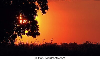 Silhouette of Lonely Tree in Sunset - Silhouette of Lonely...