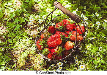 Fresh strawberries - Fresh farm strawberries in a basket on...