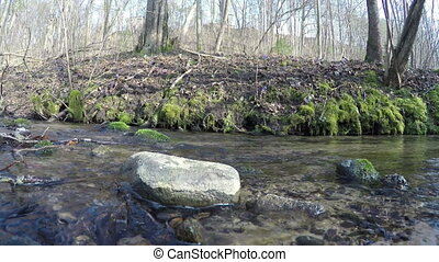 brook hepatica flowers - wild brook water flow around stones...
