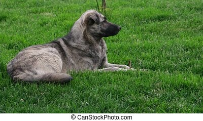 Feral dog rest on grass