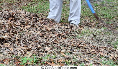 Person Raking Leaves - Person rakes leaves and dead grass...