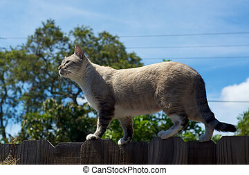 cat on fence in profile - An outdoor cat is standing...