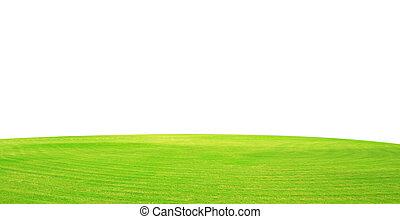 campo, pasto o césped, cielo, verde