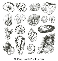 Drawn illustrations of seashells - Isolated hand drawn...