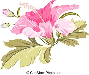 Hibiscus tropical flower. - Hibiscus single tropical flower...