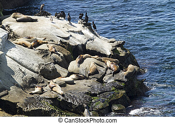 Sea Lions and Seals on Rocky Coast - Sea Lions and Seals...
