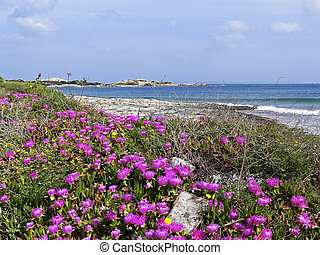 Beach near Santa di Gallura, Italy - Beach near Santa di...